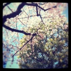 梓未來 公式ブログ/桜と空と私とカレー 画像1