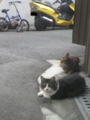 足立陸男 公式ブログ/猫 画像1
