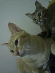 足立陸男 プライベート画像/猫コラボ 2011-01-18 07:46:18