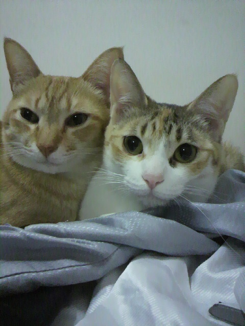2010年04月14日ちょら(左)とぽにょん(右)3