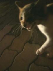 足立陸男 プライベート画像/外で撮った猫 2010年09月04日泣きながら寄ってくる猫