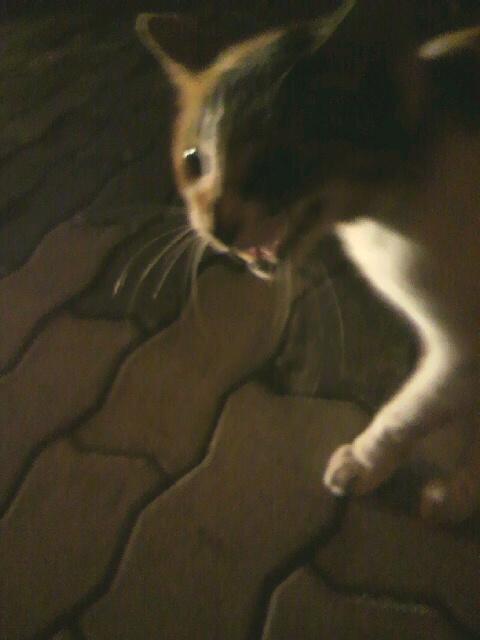 2010年09月04日泣きながら寄ってくる猫