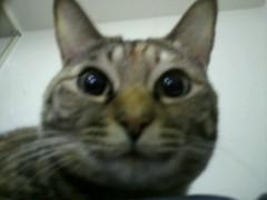 足立陸男 公式ブログ/猫(なちゅ) 画像1