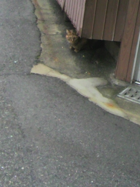2010年12月03日近所の猫2
