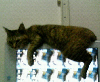 2007年01月05日PCで暖をとるなちゅ1