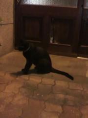 足立陸男 プライベート画像/外で撮った猫 2010年09月04日黒猫