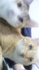 足立陸男 プライベート画像/猫コラボ 2010年12月02日ちょらの目がどえらいことに