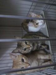 足立陸男 プライベート画像/猫コラボ 2010年11月26日出して〜