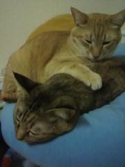足立陸男 公式ブログ/猫画像 画像2