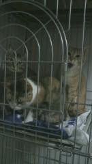 足立陸男 公式ブログ/猫のあくび 画像1