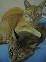 足立陸男 プライベート画像/猫コラボ 2010年04月14日なちゅ(手前)とちょら(奥)