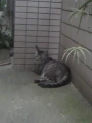 足立陸男 公式ブログ/近所の猫ちゃん 画像1