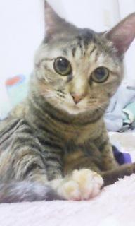 2010年01月12日おすましなちゅ