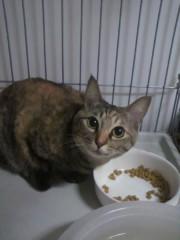 足立陸男 公式ブログ/猫のいかずち 画像1