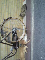 足立陸男 プライベート画像/外で撮った猫 2010年09月07日近所の野性味あふれる猫