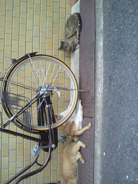 2010年09月07日近所の野性味あふれる猫