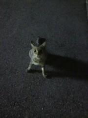 足立陸男 プライベート画像/外で撮った猫 2010年09月20日飯クレ!!