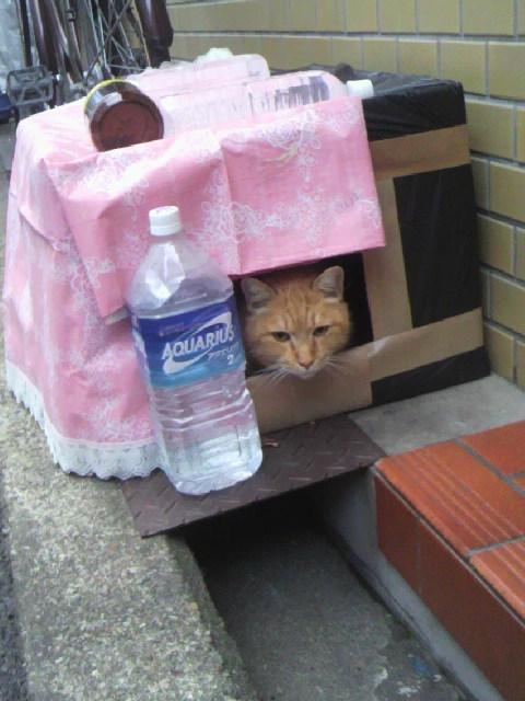 2010年12月23日近所の猫