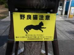 足立陸男 公式ブログ/【訂正】猫に注意 画像1