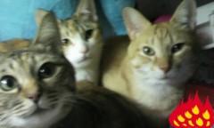 足立陸男 プライベート画像/猫コラボ 2010年05月28日