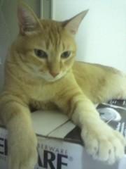 足立陸男 公式ブログ/我が家の猫 画像1