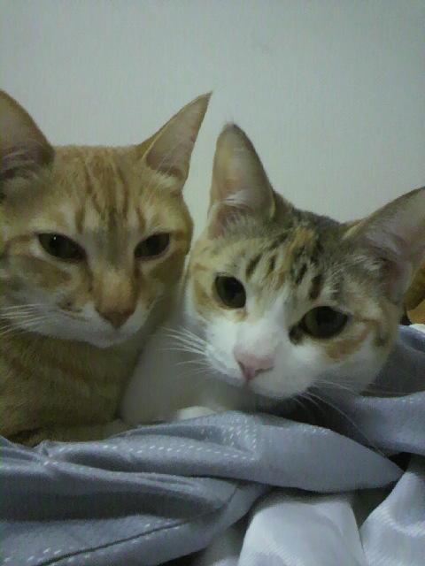 2010年04月14日ちょら(左)とぽにょん(右)1