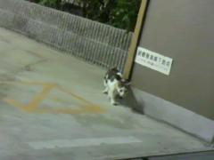 足立陸男 プライベート画像/外で撮った猫 生徒会長風猫1