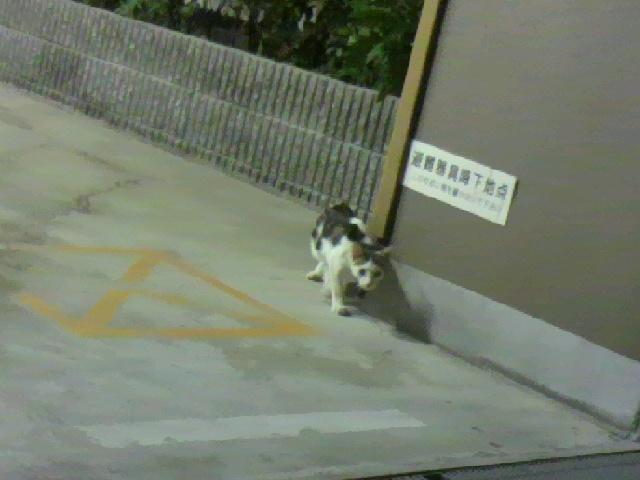 生徒会長風猫1
