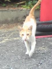 足立陸男 プライベート画像/外で撮った猫 2010年09月02日野良猫2