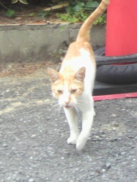 2010年09月02日野良猫2