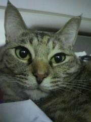 足立陸男 公式ブログ/猫なちゅ 画像1