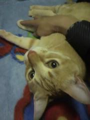 足立陸男 公式ブログ/猫マウス 画像1
