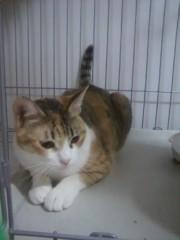 足立陸男 公式ブログ/我が家の猫 画像3