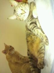 足立陸男 プライベート画像/猫コラボ 2010年05月03日ちょら(左)とマライヤキャリー