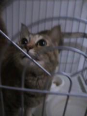 足立陸男 プライベート画像/なちゅ 2010年12月03日なちゅ