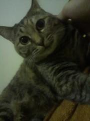 足立陸男 公式ブログ/我が家の猫 画像2
