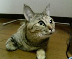 足立陸男 公式ブログ/なぢゅー〓 画像1