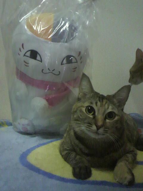 2010年11月25日なちゅとニャンコ先生