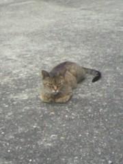 足立陸男 プライベート画像/外で撮った猫 2010年09月02日野良猫3