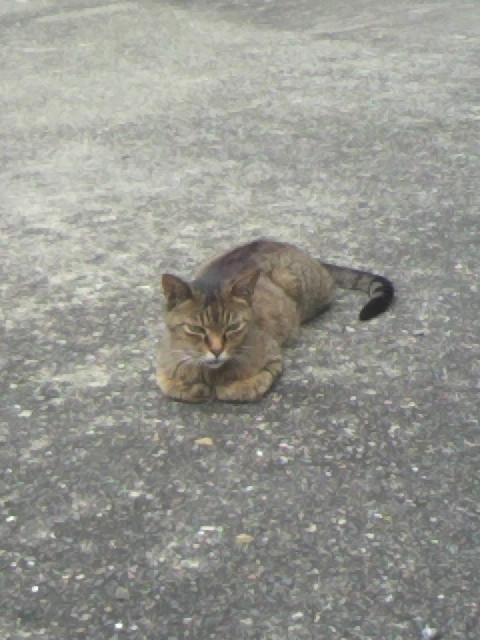 2010年09月02日野良猫3
