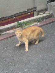 足立陸男 プライベート画像/外で撮った猫 2010年09月02日野良猫1