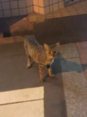 足立陸男 プライベート画像/外で撮った猫 2010年09月07日近所の人懐っこい猫