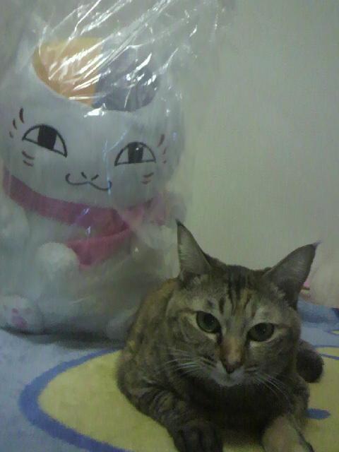 2010年11月25日なちゅとニャンコ先生2