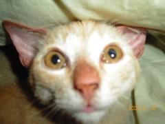 足立陸男 プライベート画像/ちょら 2004年01月18日SM〇Pの草〇にそっくり