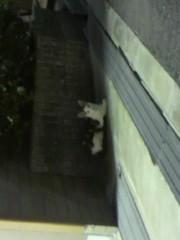 足立陸男 プライベート画像/外で撮った猫 生徒会長風猫2