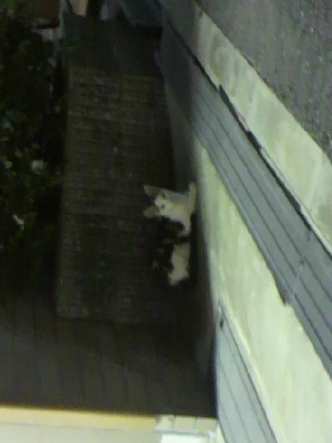 生徒会長風猫2