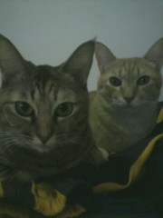足立陸男 公式ブログ/猫画像(ポロリはありません) 画像1