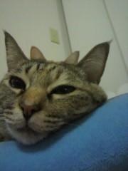 足立陸男 公式ブログ/猫画像 画像3