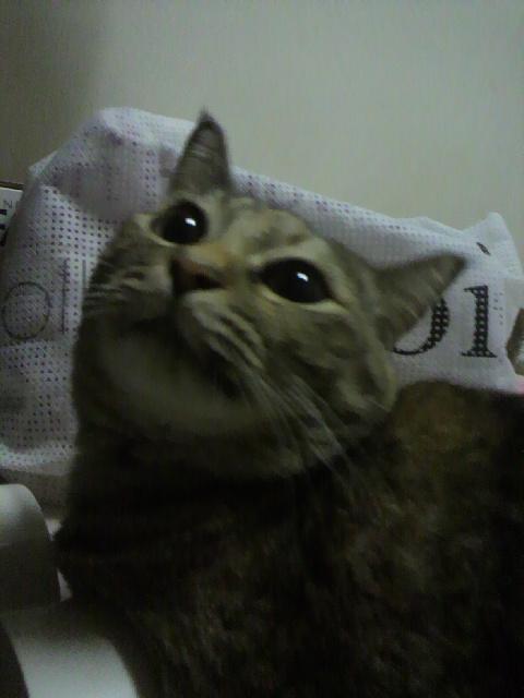2010年09月04日なちゅ