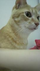 足立陸男 公式ブログ/猫(ちょら) 画像1